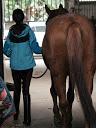 pony_zum_striegeln_fuehren