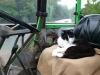 katze_auf_traktor